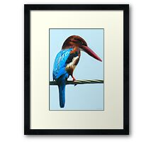 <º))))>< KINGFISHER PICTURE/CARD<º))))><  Framed Print