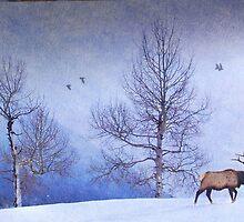 bull elk heading down valley by R Christopher  Vest