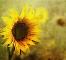 Sunflowers by lucyliu