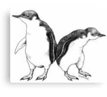 Little Blue Penguins - smallest penguin in the world! Canvas Print