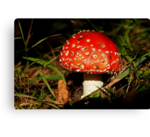 Red Cap Canvas Print