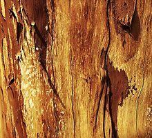 Wood Grain Texture Design  by Sookiesooker