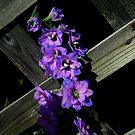 On The Fence ! by Elfriede Fulda