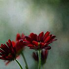 Cayenne Red Chrysanthemums by Glenda Williams