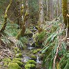 Green Wood by LionsRoar