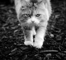 catwalk by meowscott
