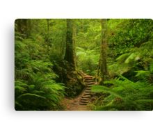 Magic Rainforest Canvas Print