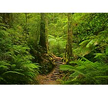 Magic Rainforest Photographic Print