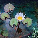 Zenful by John Rivera
