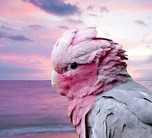 Galah Cockatoo and Summer Sky by Erika Kaisersot