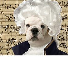 Mozart and Marie The Admiral Bulldog Composer by MozartandMarie