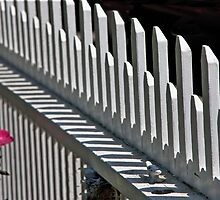 Rose And White Fence by phil decocco