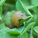 Garden Slug by Martha Medford