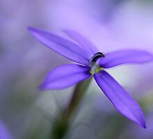 Purple Dreams by AnnieSnel