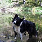 Indy in the pond by Michael Haslam