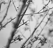fleeting~ by Brandi Burdick