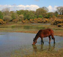 Setley Pond by RedHillDigital