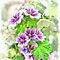 Featured in 'Gorgeous Flower Cards' - 3 February 2015