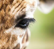 Eye of Giraffe by link2sue