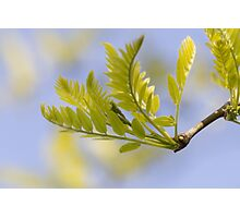 tree in spring Photographic Print