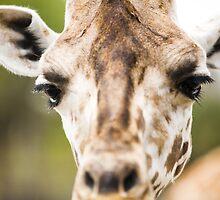 Lil Giraffe by link2sue