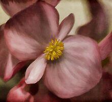 Dewy Pink Painted Begonia by Lois  Bryan