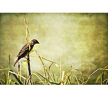 morning Sparrow Photographic Print