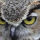 Horned Owl up close... by RichImage