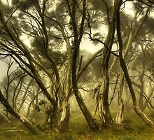 Wind in the snowgums by Kevin McGennan