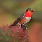HummingbirdXX by loiteke