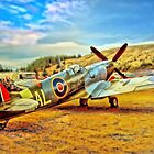 Spitfire by wallarooimages