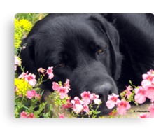 A Bed of Flowers Canvas Print
