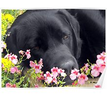 A Bed of Flowers Poster