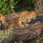 Incoming by Owed to Nature