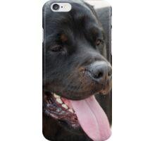 labrador retrive iPhone Case/Skin