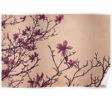 Tree Blossoms 3 Poster