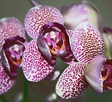 Glass Orchid by RedHillDigital