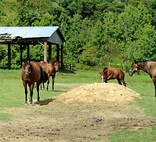 Panoramic View of Horses by WeeZie