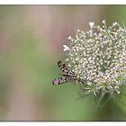 A wild flower  by Johanna26