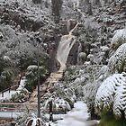 Snow at steavenson falls . by Donovan wilson