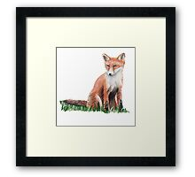 Looking Foxy Framed Print