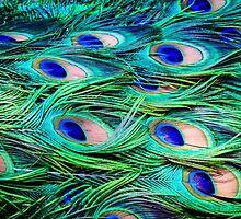 Peacock Feather Carpet by Silken Photography