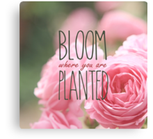 Bloom Where You Are Planted Pink Roses 2 Canvas Print