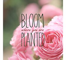 Bloom Where You Are Planted Pink Roses 2 Photographic Print