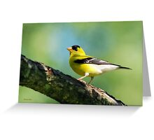 Blue Heart Goldfinch Greeting Card