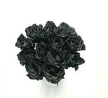 Portfolio 24 By Storm Black by Storm Black