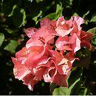 Pink Flowers. by godtomanydevils
