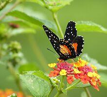 Butterfly by godtomanydevils