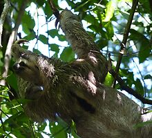 Sloth in a Tree by godtomanydevils