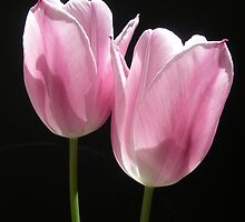 Two Pink Tulips by Kathleen Brant